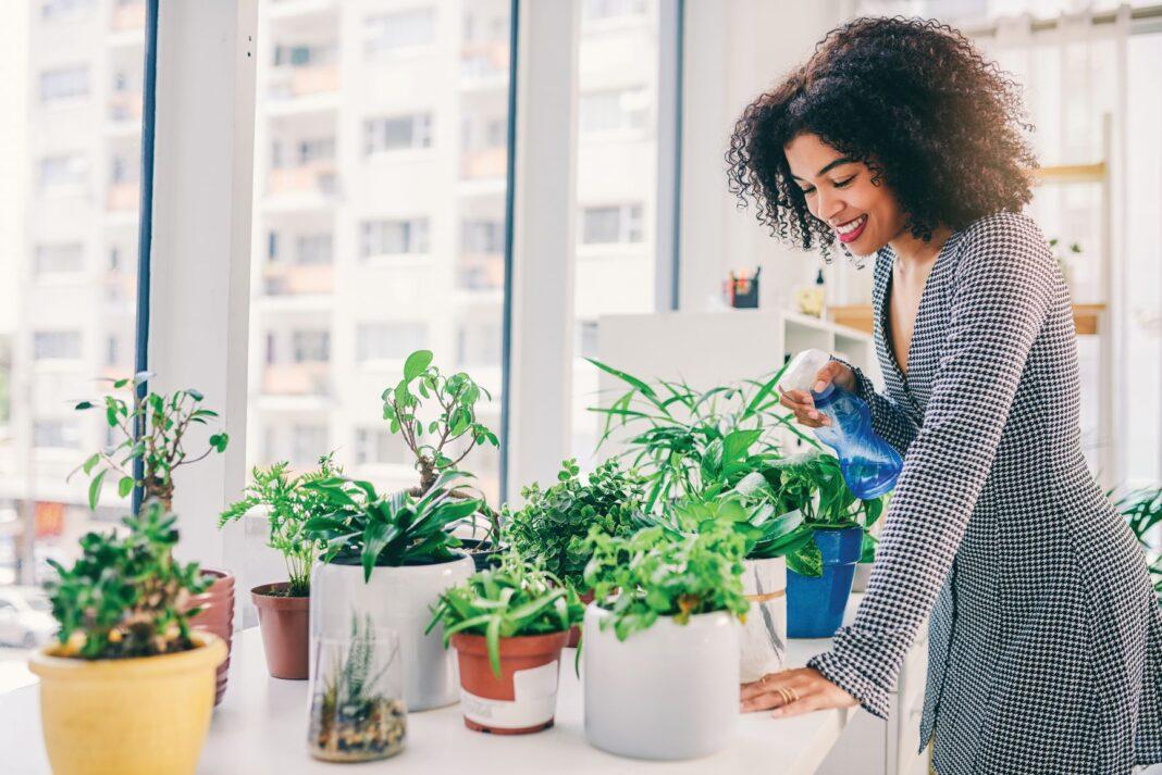 woman watering plants indoors