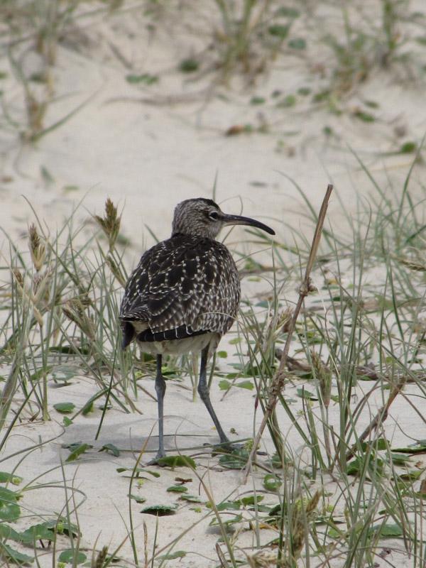 bird in sand